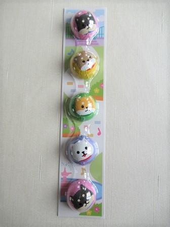 柴犬チョコラージュ (2)