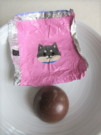 柴犬チョコラージュ (7)