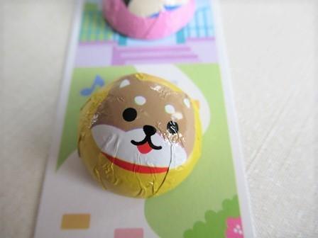 柴犬チョコラージュ (9)