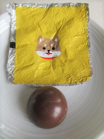柴犬チョコラージュ (10)