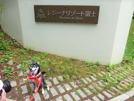 レジーナリゾート富士温泉水プール1