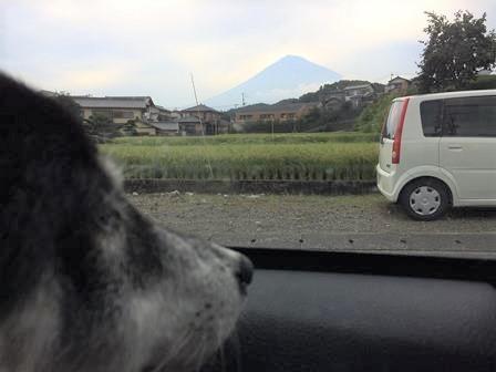 白糸ノ滝 (64)