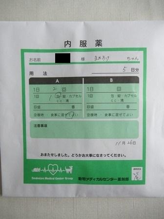 動物病院1126採血やり直し (5)