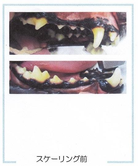 病院12222018歯石除去6