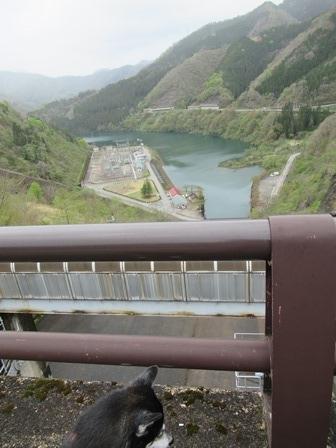 九頭竜ダム13