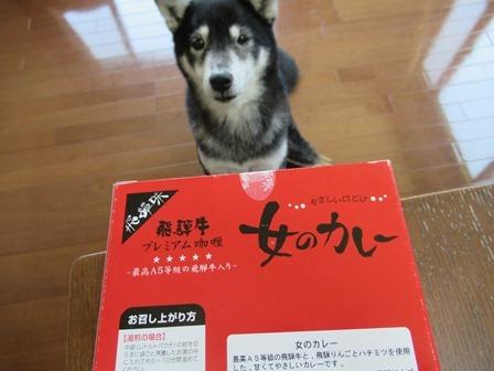 飛騨牛女カレー2