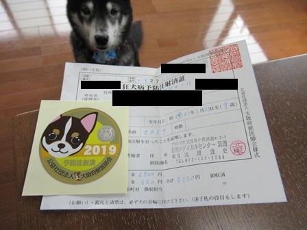 2019狂犬病3