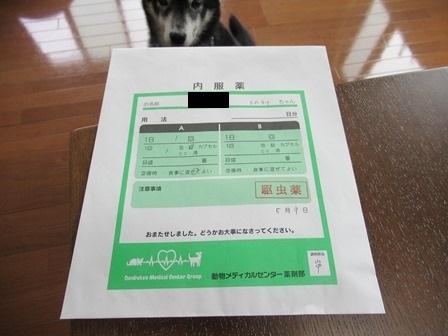 2019狂犬病10