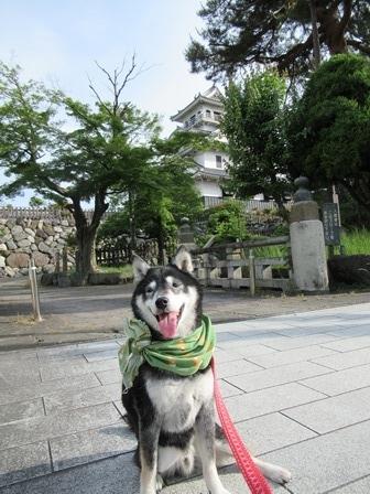 豊公園(長浜城跡) (28)