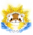 risingsunferret