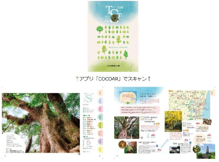 H31223 巨樹