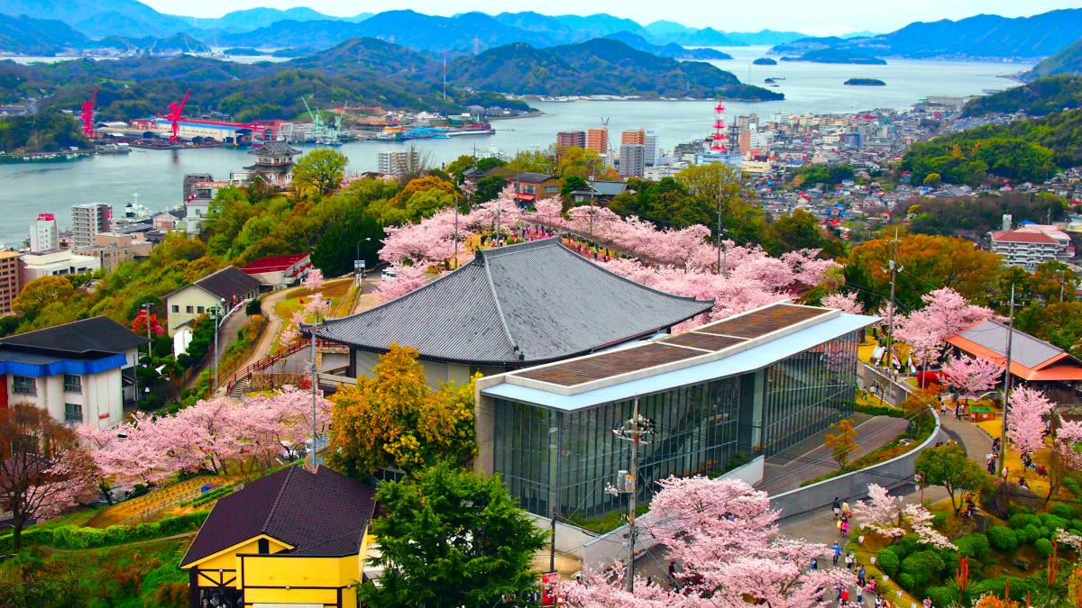 路地裏見聞録的この桜がすごい!2019