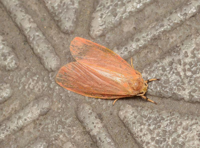 蛾の画像リスト