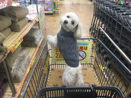 ペットショップ犬売れ残り