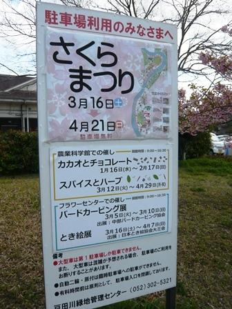戸田川緑地さくらまつり1