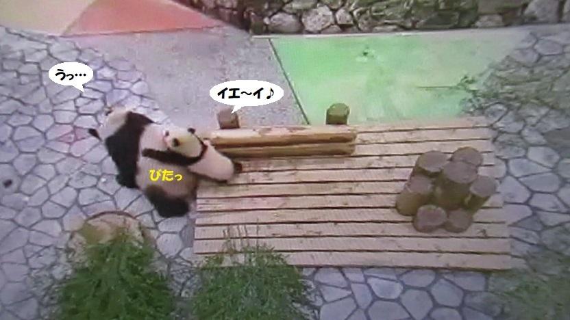 1157.jpg