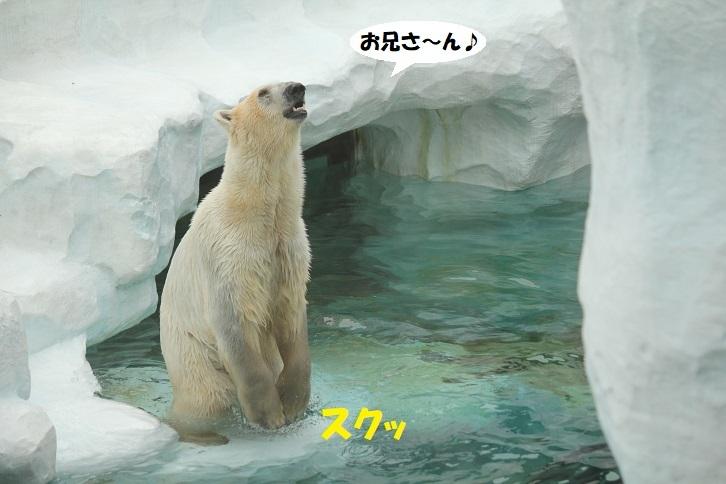 242 - コピー
