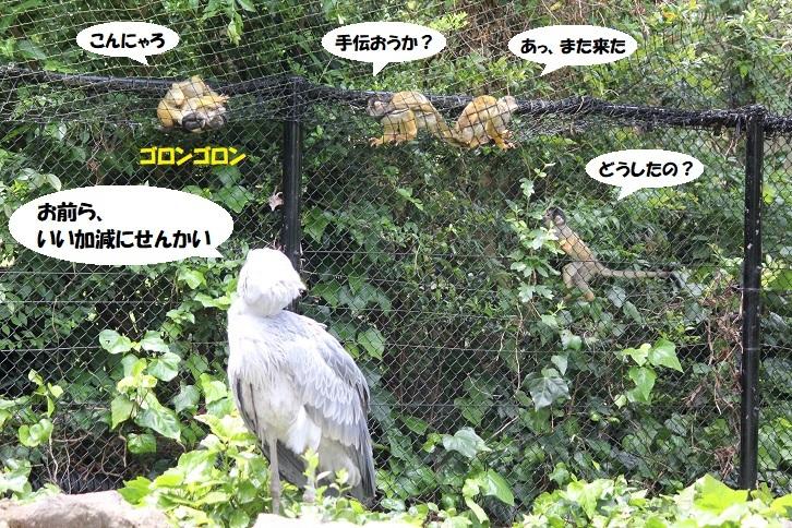 IMG_0432 - コピー