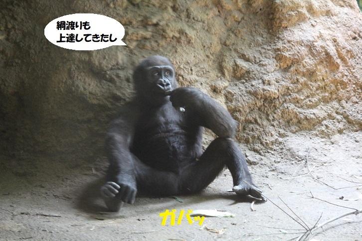 81 - コピー