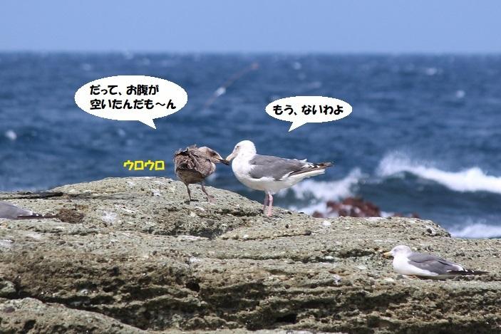IMG_0037 - コピー