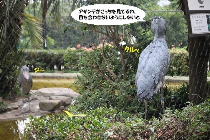 105 - コピー (2)