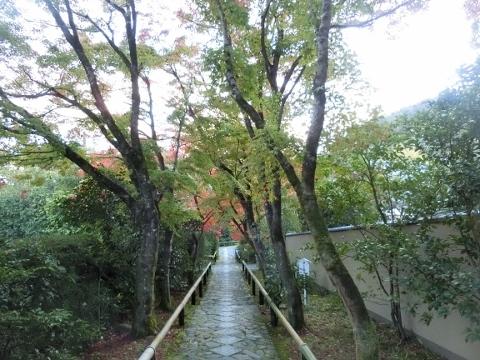 2018-11-14 京都 1 039 (480x360)