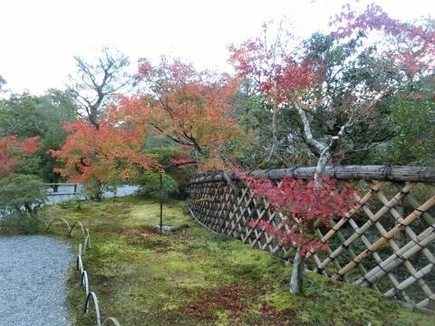 2018-11-14 京都 1 048 (480x360) - コピー
