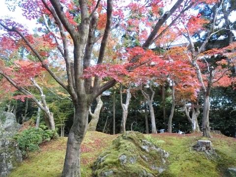 2018-11-15 京都 2 008 (480x360)