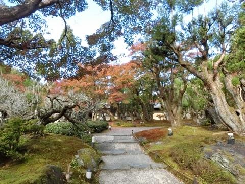 2018-11-15 京都 2 009 (480x360)