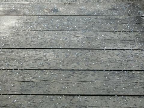 2018-12-28 あられ 001 (480x360)