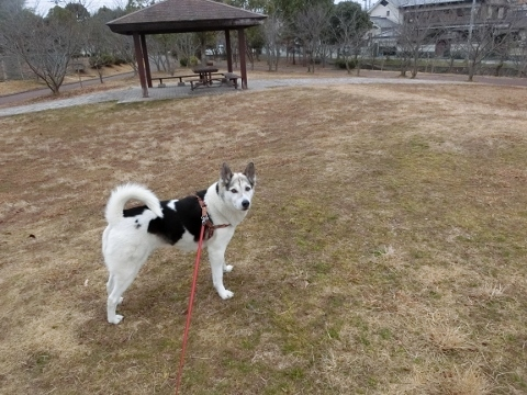 2019-02-09 散歩 011 (480x360)