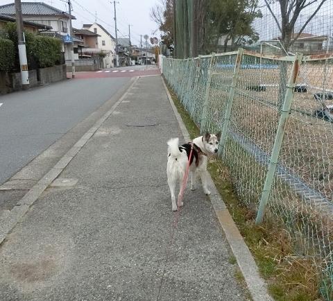 2019-03-03 散歩 004 (480x434)
