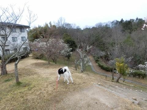 2019-03-10 散歩 007 (480x360)