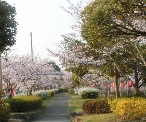 2019-04-07 桜 014 (480x400)