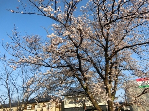 2019-04-08 散歩 009 (480x360)
