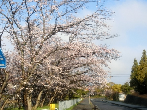 2019-04-08 散歩 013 (480x360)