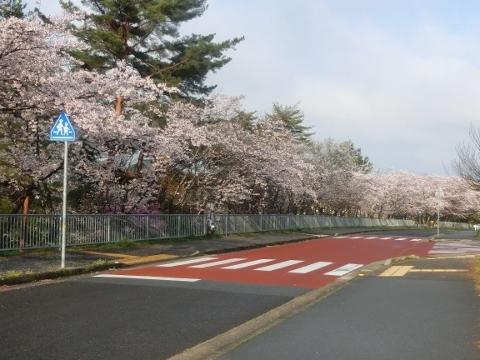 2019-04-08 散歩 023 (480x360)