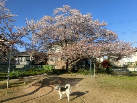 2019-04-13 散歩 010 (480x360)