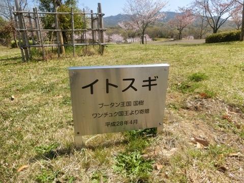 2019-04-16 防災公園 005 (480x360)
