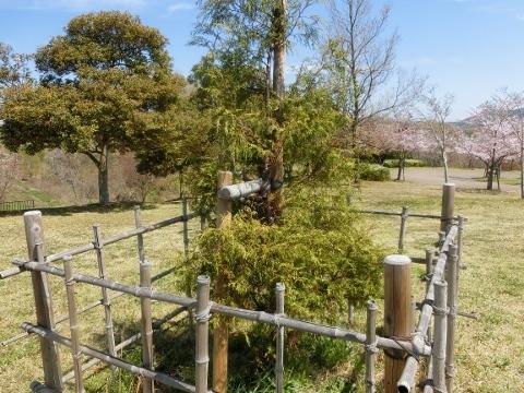 2019-04-16 防災公園 006 (480x360)