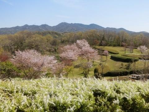 2019-04-16 防災公園 009 (480x360)