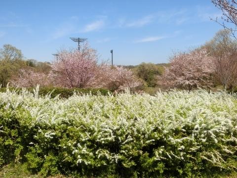 2019-04-16 防災公園 018 (480x360)