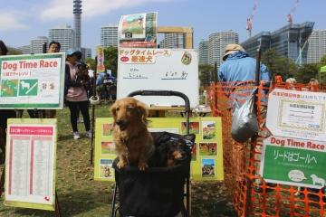 H31042017横浜ドッグウィーク