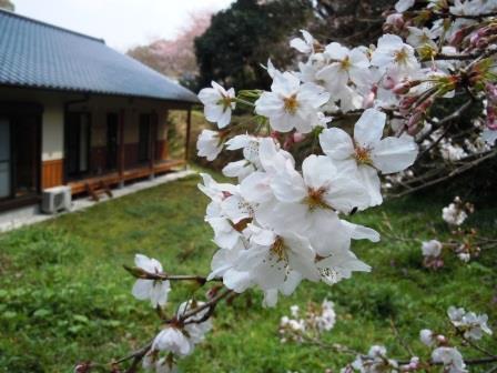 桜1(2019-03-28)