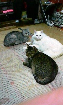 宏之の愛猫たち