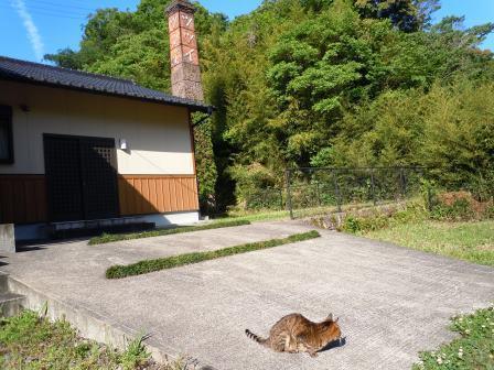 のんちゃん10(2019ー05ー10)