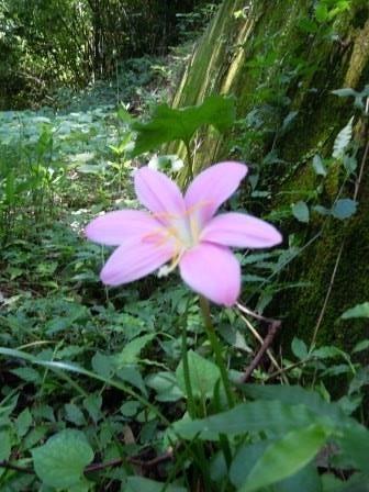 ピンク花3