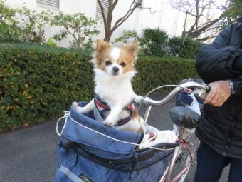 土手にお散歩0102 001