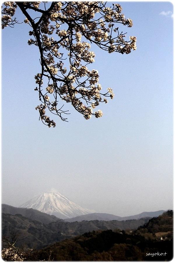 sayomaru26-482.jpg