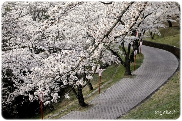 sayomaru26-487.jpg